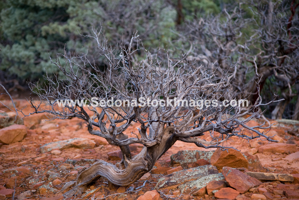 DevilsBr3516.jpg, Sedona Stock Images, Sedona Stock Photo, Landscape Photographer Victor Cariri, Devil's Bridge