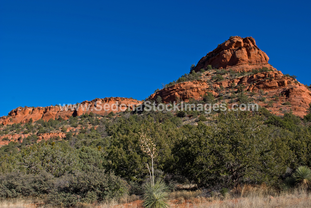 DoeMtnTr2267.jpg, Sedona Stock Images, Sedona Stock Photo, Landscape Photographer Victor Cariri, Doe Mountain