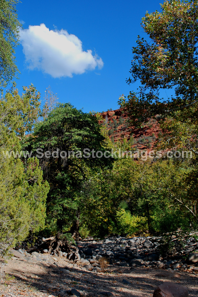 Grass1299.JPG, Sedona Stock Images, Sedona Stock Photo, Landscape Photographer Victor Cariri, Grasshopper Point
