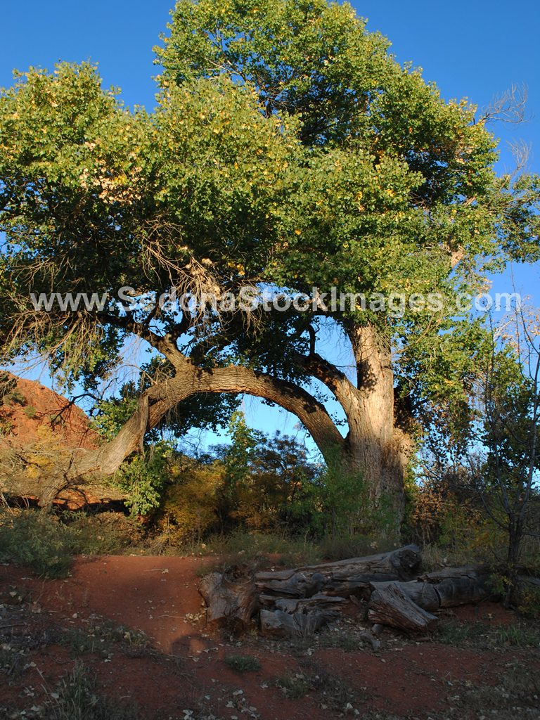 RRX1226.JPG, Sedona Stock Images, Sedona Stock Photo, Landscape Photographer Victor Cariri, Red Rock Crossing