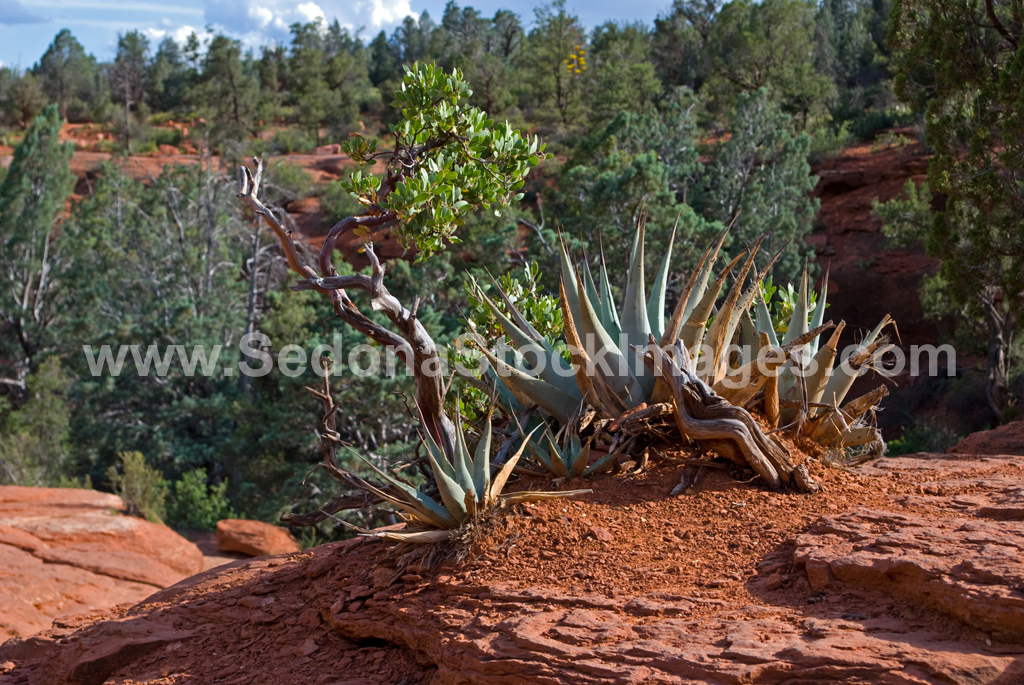 SevenPools4403.jpg, Sedona Stock Images, Sedona Stock Photo, Landscape Photographer Victor Cariri, Teacup Trail