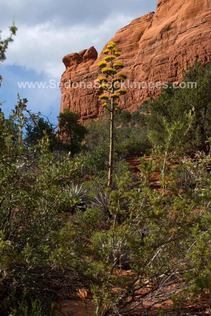 Sphinx4314.jpg, Sedona Stock Images, Sedona Stock Photo, Landscape Photographer Victor Cariri, The Sphinx